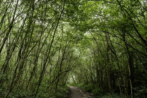 photo of trees in Lightwood, Stoke-on-Trent Jenny Harper